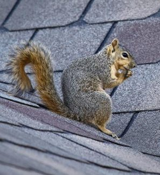 door one wildlife situations excluding exclusion learn way squirrels solutions doors nature articlemedium squirrel mammals